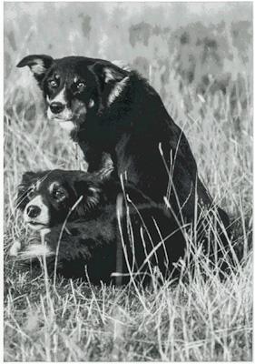 Nan and Elwy Glen