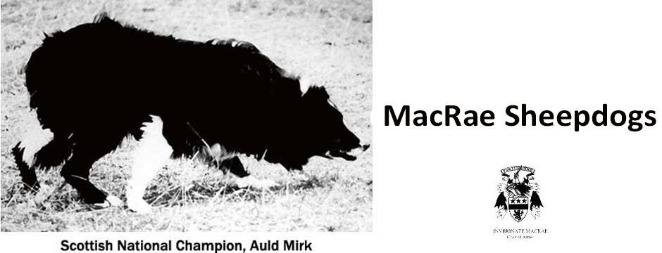 MacRae Sheepdogs